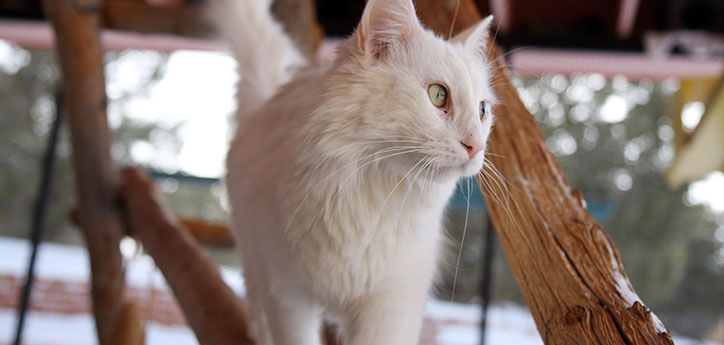 White cat enjoying outdoor time in an enclosed cattery