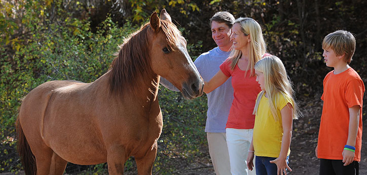 This couple and their daughter and son are considering adopting this brown horse.