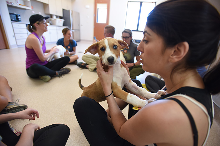 Puppy with two different colored eyes up on his front legs on a woman's lap who's sitting on the ground with a group of other people