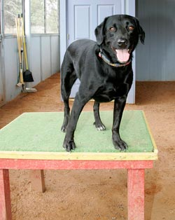 The short table was designed to teach dogs to stay in one place