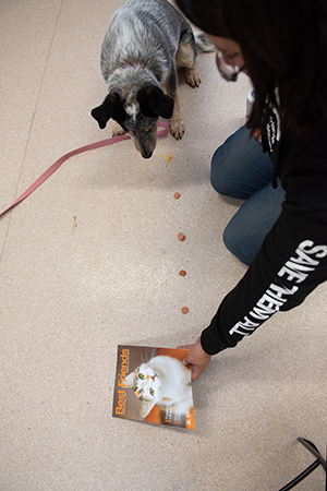 Person with a line of treats for a dog leading to a Best Friends magazine