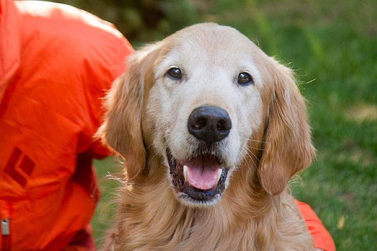 Dog Training PDF | Best Friends Animal Society