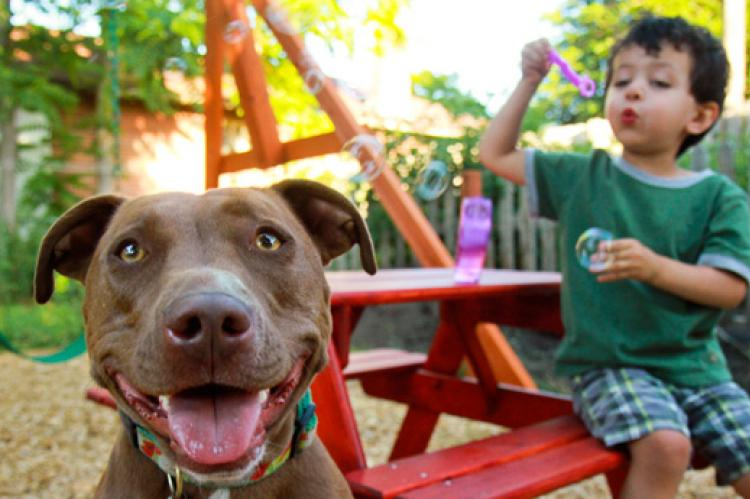 Breed discrimination against dogs like this friendly brown pitbull do not make communities safer.