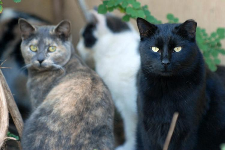 Multiple community cats including a dilute calico and black cat