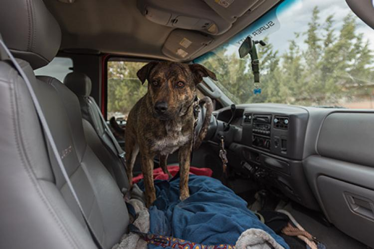 Dog who used to be anxious about riding in the car is ready to go for a ride.