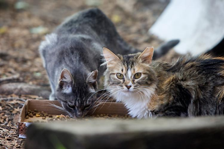 TNR for feral cats is an effective way to manage outdoor cat populations.