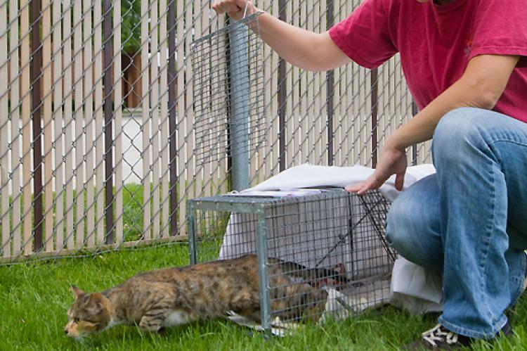 Stray cat who was trapped for TNR and is now being released