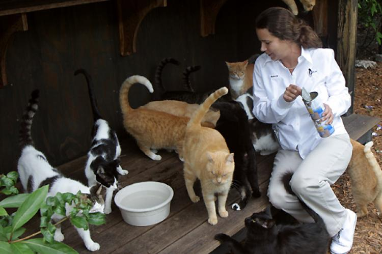 Cat colony caregiver and felines who are part of a TNR program for cats