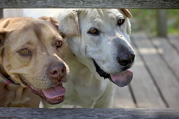 States with Legislation that Discriminates Against Dogs Seized in Dogfighting Cases