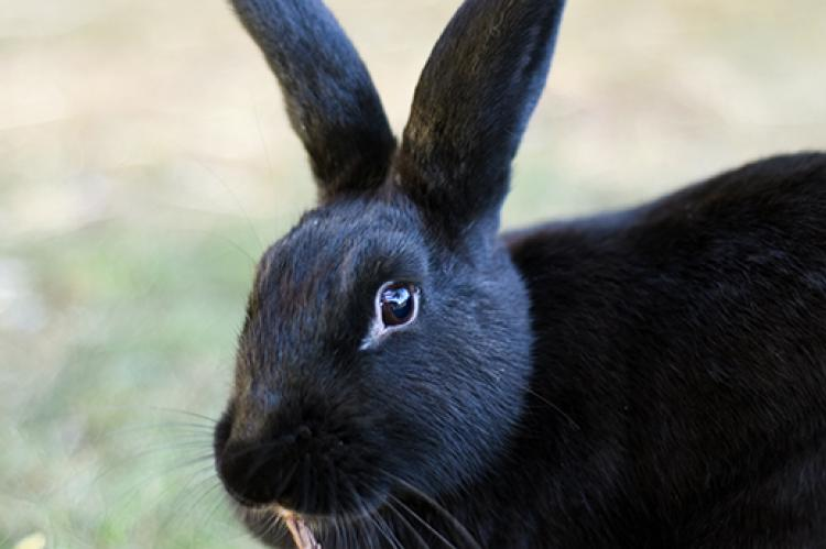 Rabbit Health Check: Signs of a Healthy Bunny