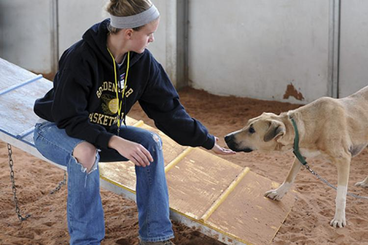 Woman using positive reinforcement to train a shelter dog