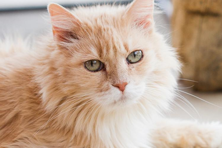 Cat Kidney Disease Causes Signs Treatment Best Friends Animal Society
