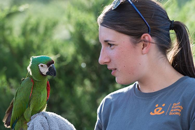 Parrot behavior and training with Templeton and Melissa