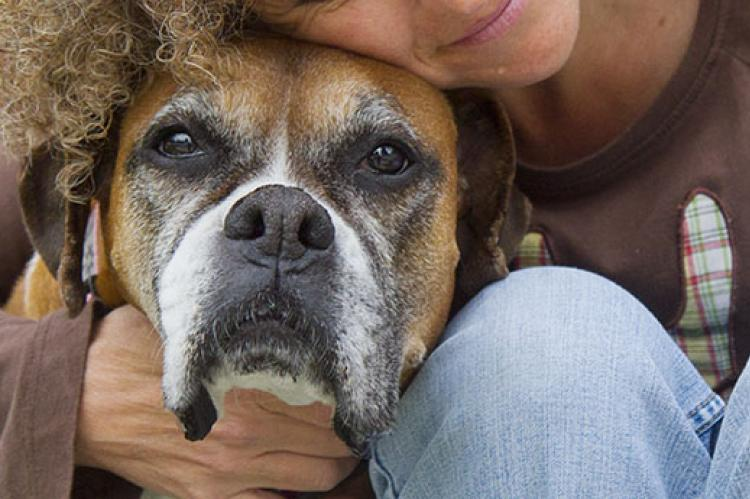 Senior Pets and Health Issues