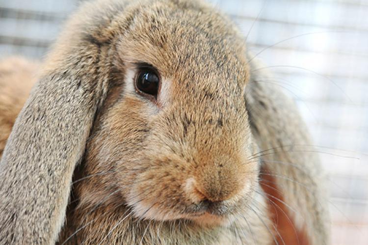 Sick Bunny: Is Your Rabbit Ill?