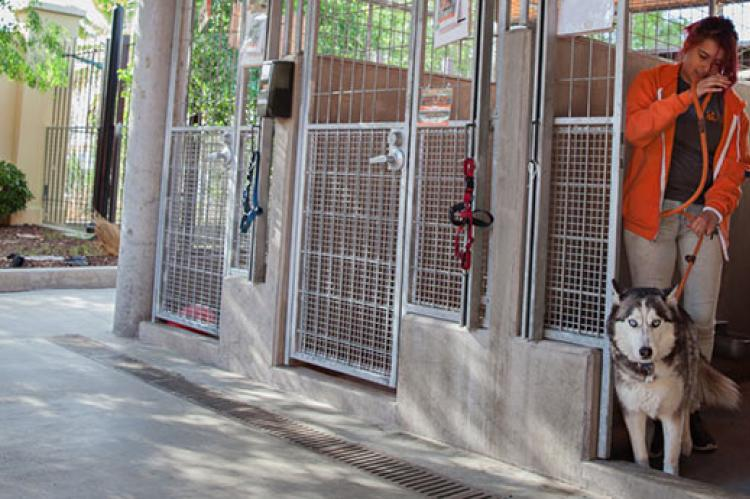 Dogs at the shelter are taught to wait while a door or gate is being opened. This skill makes them more adoptable.