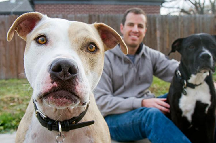 Helping pitbulls like these two friendly dogs is key to achieving no-kill.