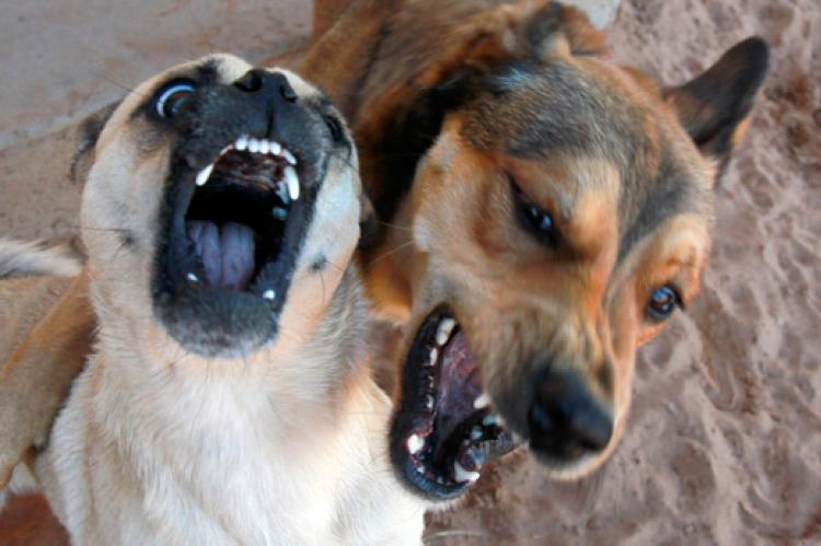 Two shelter dogs playing is harmless enough but could get out of hand. To protect your animal rescue organization, you should invest in animal rescue insurance.