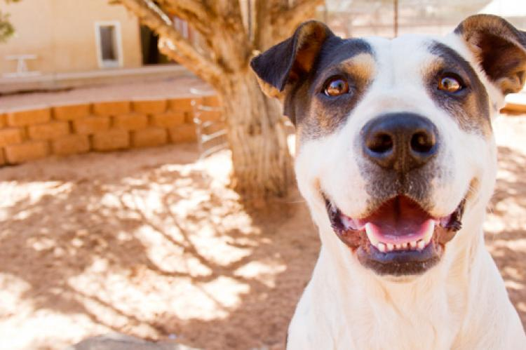 Organize a pet food drive to help animals in need, like this pitbull mix who is up for adoption.