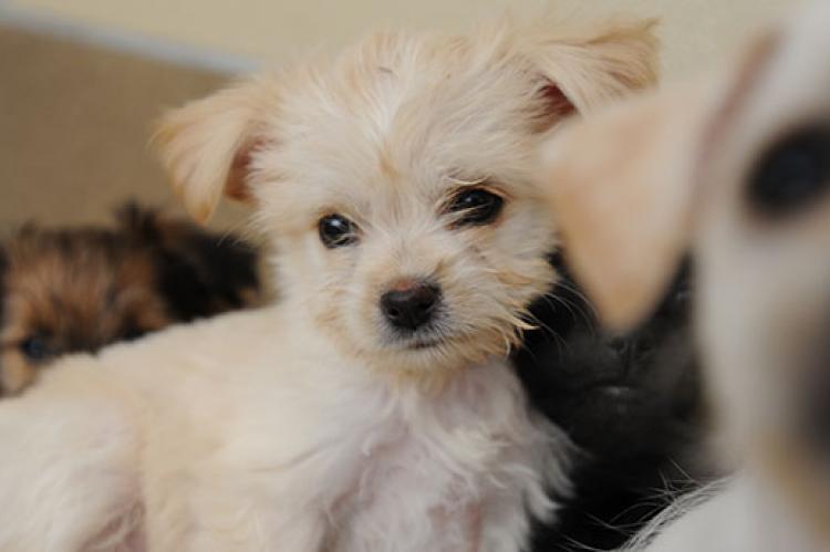 Craigslist Louisville Ky Pets - petfinder
