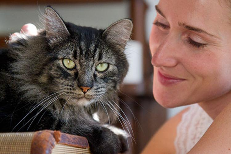 This longhair gray tabby cat was scared of sudden movements, but her anxiety has improved greatly.