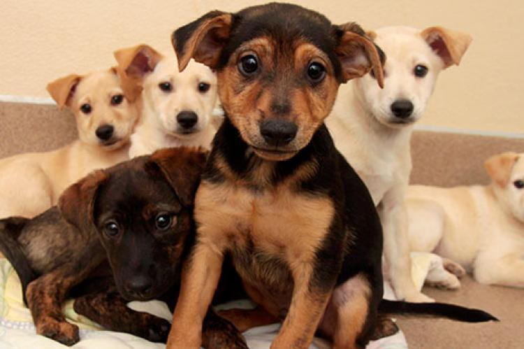 How do you go about choosing a dog? Should you adopt a puppy like one of these bundles of energy or an adult dog?