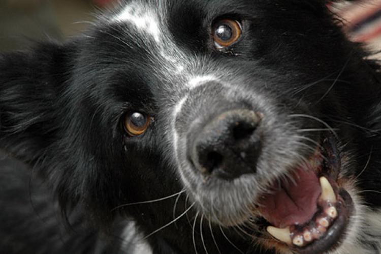 Dog Muzzle Instructions | Best Friends Animal Society