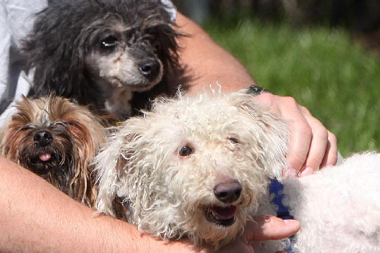 These three dogs with various health problems were rescued from puppy mills. Help stop puppy mills.