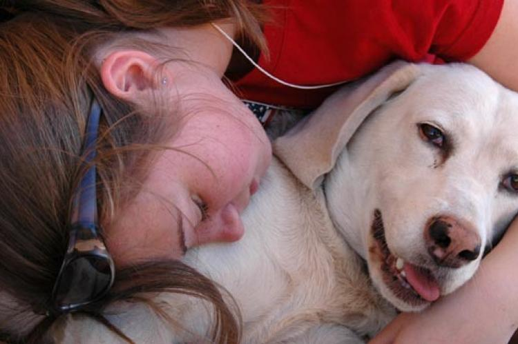 Girl with her family's foster care dog, a white Labrador Retriever mix
