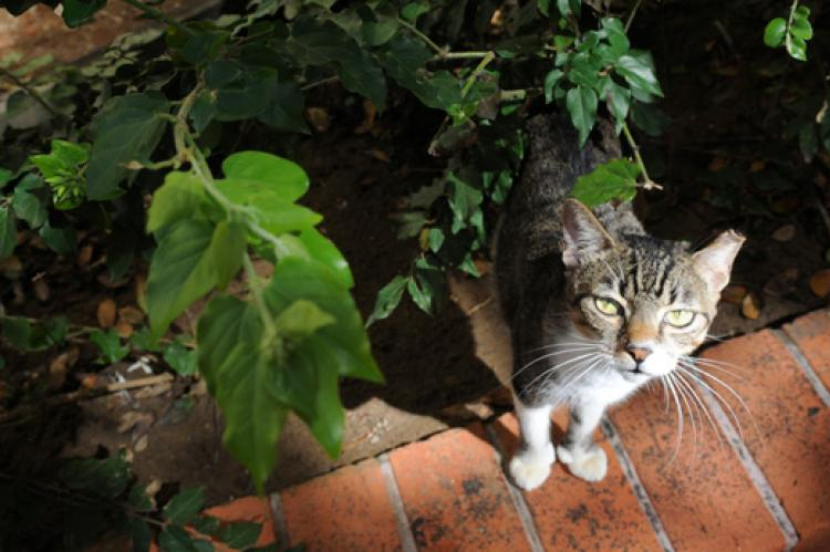 Free-roaming cat in bushes
