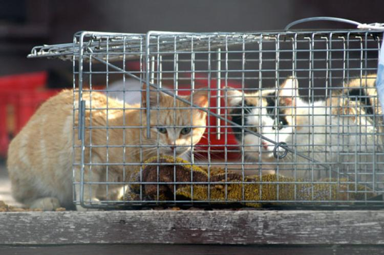 Two cats near cat trap being used for trap/neuter/return