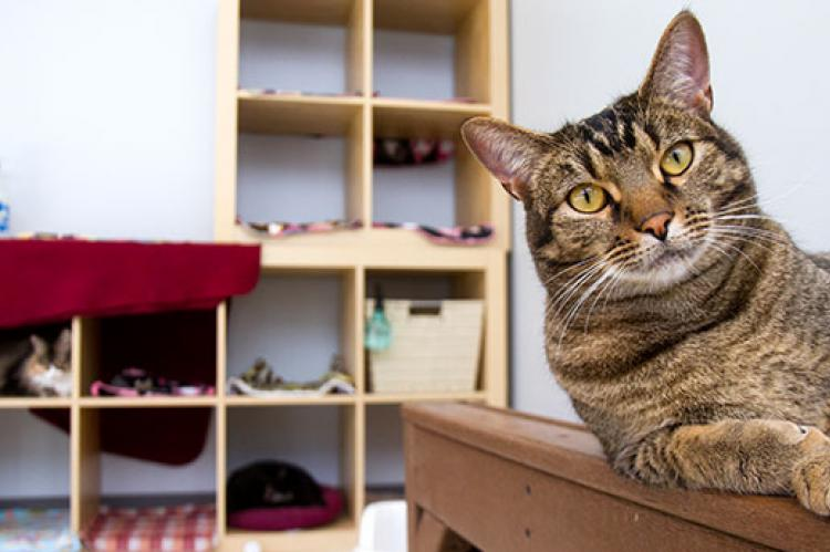 Brown tabby cat used to display aggression towards people, but has been rehabilitated.