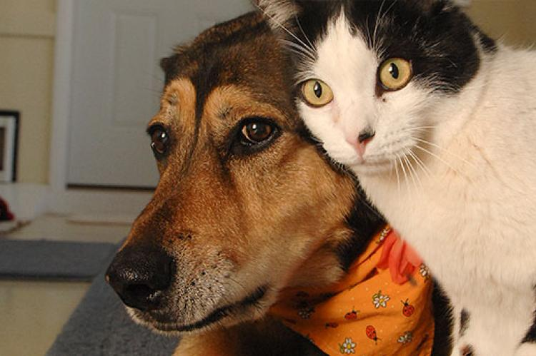 This dog and cat have been introduced properly and are getting along very well.