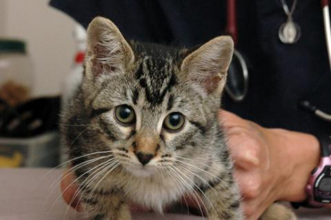 Working with local veterinarians help with the success of community cat programs.