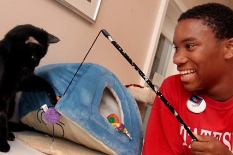 Man playing with a cat using a wand toy