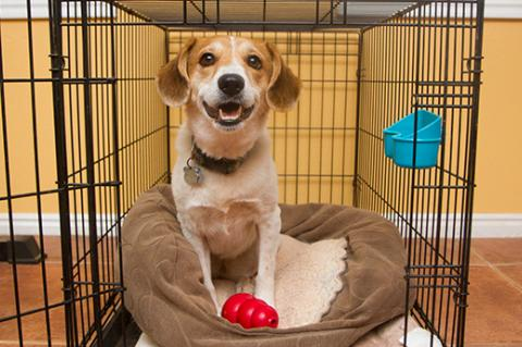Brown and white dog in a crate