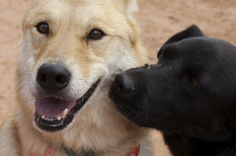 Two well-socialized dogs getting along together well