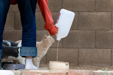 Feeding a community cat