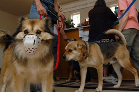 Dog wearing a muzzle at the vet