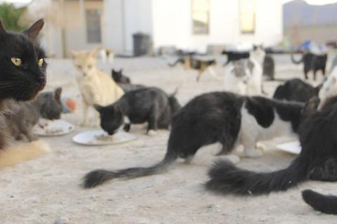 Animal hoarders often mean well, but the situation often escalates out of control with an unmanageable number of animals, like the large number cats in this photo.