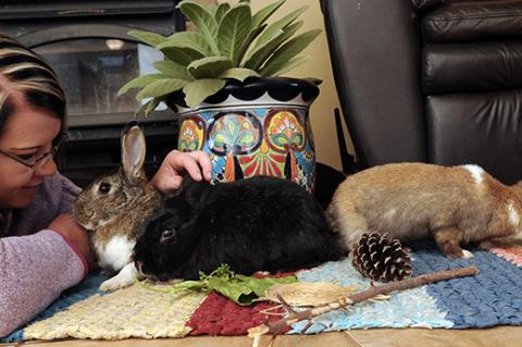 """Woman petting three rabbits who are playing on a rug in her """"bunny proofed"""" home"""