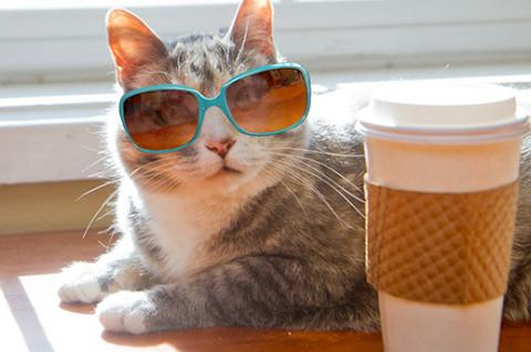 Shelter cat wearing sunglasses and sitting next to a coffee mug
