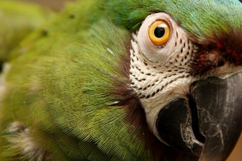 Green parrot who is healthy and happy. Bird health is an important part of overall wellness.