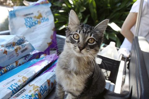Community Cats Shopping List