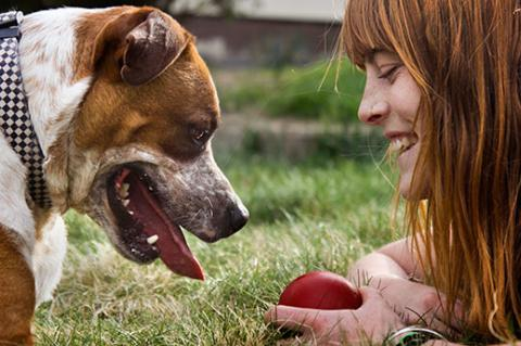 Woman teaching her canine friend dog commands