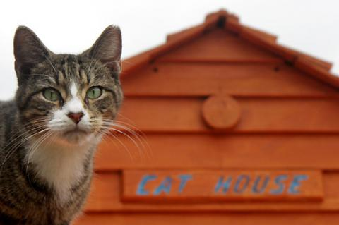 Programs for strays need to consider housing options for cats recovering from spay/neuter surgery.