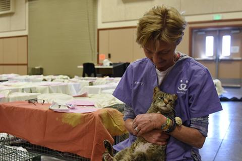 Veterinarian wearing scrubs holding a brown tabby cat, surrounded by sheet covered humane traps