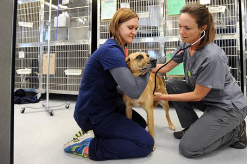 Dog being handled by a vet tech while being examined by a veterinarian