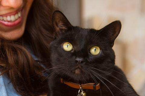 Black cat and her person. This kitty is very scared of noises, but his person is helping him overcome his fear.