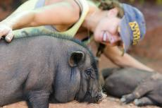 Potbellied pigs can make wonderful companion animals, but they aren't the right pet for everyone